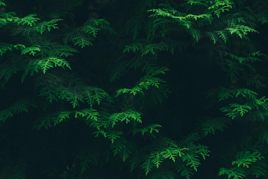 Sanar y Cuidar Árboles con EMO